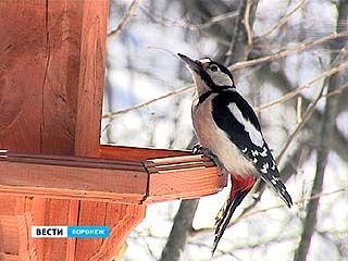 Птицы, прилетев в Воронежский регион в середине марта, улетели обратно