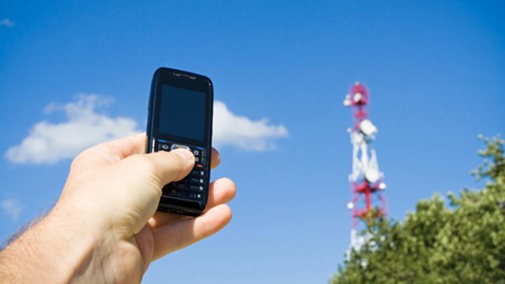 Воронежский биосферный заповедник остался без мобильной связи и Интернета