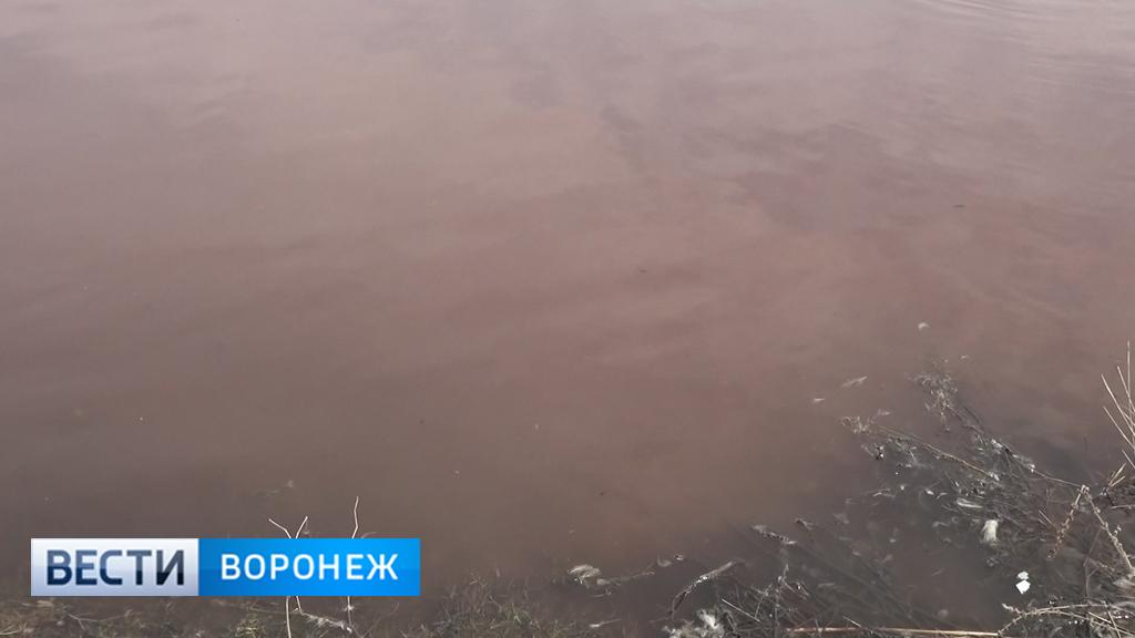 Глава воронежского села попросила санврачей повторно исследовать розовую воду в пруду