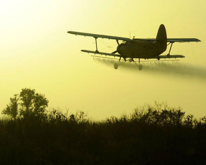 Самолет столкнулся сдеревом ирухнул наполе под Воронежем