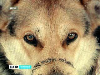 Раненая собака умерла на руках у ветеринаров