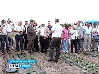 Российские садоводы учились выращивать клубнику в Острогожском районе