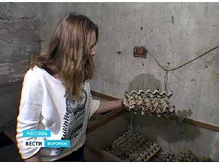 Россошанские юннаты разводят сверчков в промышленных масштабах