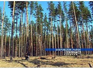 Рубить лес в Воронежской области теперь будут по-новому