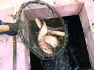 Рыбой из водохранилища бойко торгуют на автостраде