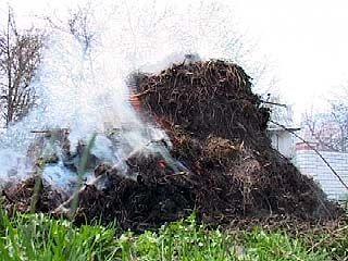 С 15 апреля в лесах Воронежской области официально объявлен пожароопасный период