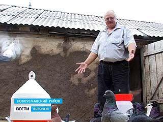 Самая большая гордость Владимира Бабенко - голуби мясной породы