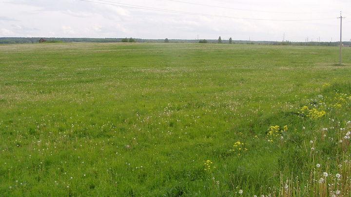 Главной подозреваемой по делу о хищении земли под Воронежем стала дочь главы района