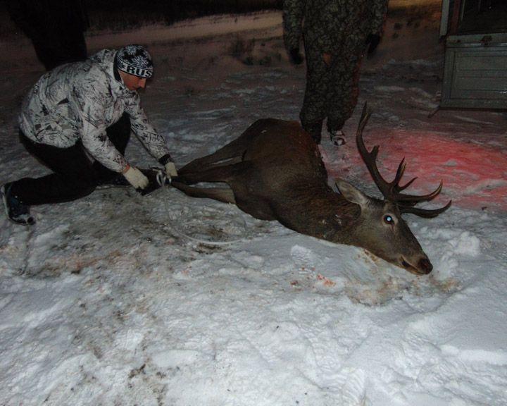 ФОТО: Сотрудники Воронежского заповедника поймали оленя, который забрёл на завод в Липецкой области