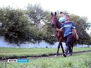 Сеансы иппотерапии больным ДЦП в Воронеже сумел подарить одиннадцатикласник
