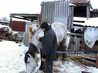 Села Воронежской области атакуют конокрады