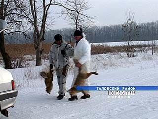 Села Воронежской области атакуют лисы