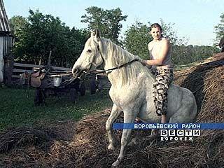 Семья Поленовых развивает цирковые способности у лошадей