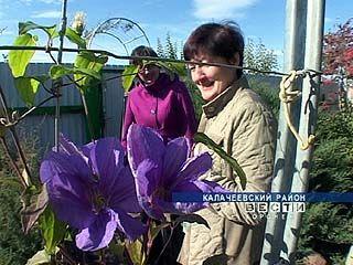 Семья Верещак 25 лет создавала дендрарий в собственном саду