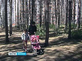 Северный лес официально стал природным парком областного значения