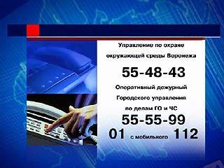 Шквальный ветер обрушил в Воронеже 17 деревьев