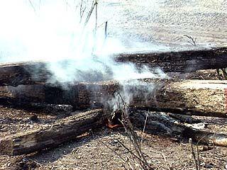 Ситуацию с лесными пожарами обсудили на заседании областной комиссии
