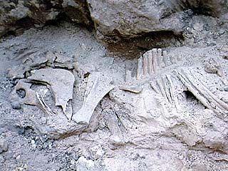 Скелет носорога нашли в Лисках