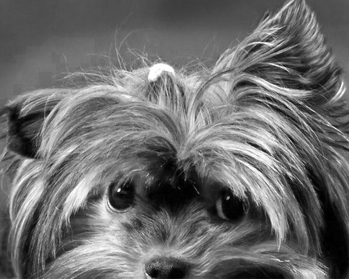 Собачья Санта-Барбара в Воронеже