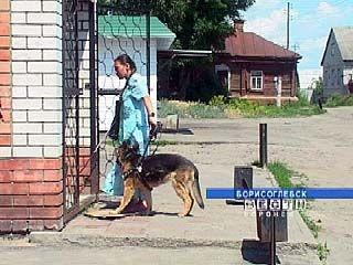 Собака-поводырь есть только у одного инвалида Воронежской области