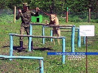 Собаки служат в армии восемь лет