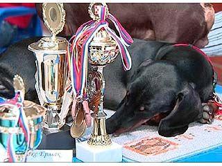 Соревнования по аджилити прошли в Воронеже в 4-й раз