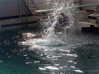 Соревнования по прыжкам в воду закончились