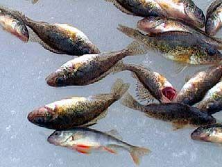 Соревнования по зимней рыбной ловле прошли в Воронеже