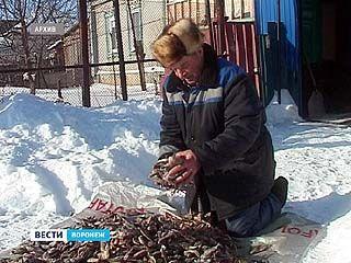 Сотрудники Росрыболовства назвали причину массового замора рыбы на Битюге