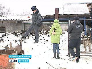 Сотрудники убойных пунктов выбрасывают отходы производства за забор