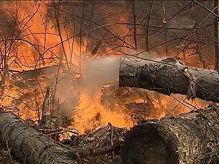 Спасатели продолжают тушить пожар на территории Биосферного заповедника в Липецкой области