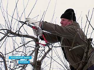 Специалисты начали делать прогнозы, каким будет урожай яблок 2011 года