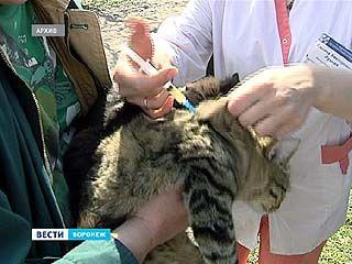 Специалисты отмечают девять очагов распространения бешенства на территории Воронежа