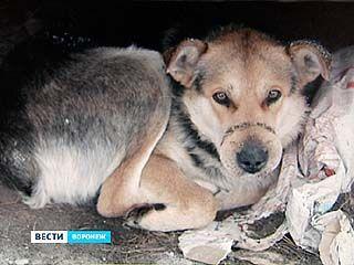 """""""Справедливая Россия"""" предлагает усилить уголовную и административную ответственность за жестокое обращение с животными"""