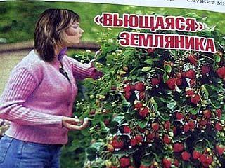 Среди садоводов зреет скандал - сеют одно, пожинают совсем другое