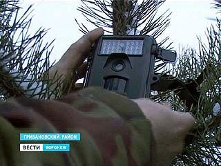 Срубил ёлку - получил фото в протокол. За браконьерами теперь следят скрытые камеры