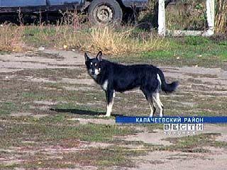 Стаи бродячих собак терроризируют Ильинку