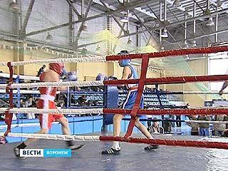 Стартовал боксерский турнир, посвященный памяти бойцов-спецподразделений СОБР