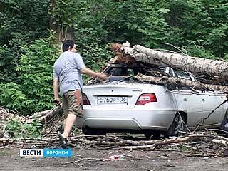 Старые деревья в Воронеже не выдержали напора стихии