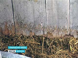 Страх и ужас в Павловске -  чупакабра вновь вышла на охоту