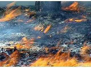 Страшный пожар в Верхнемамонском лесничестве