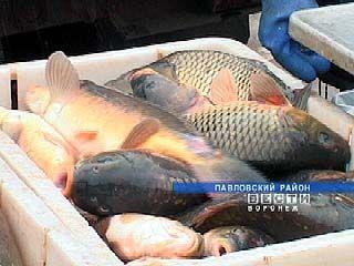 Свежую рыбу на воронежских рынках можно купить даже зимой