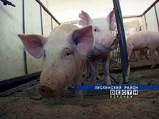 Свиноводческие фермы Воронежской области закрыты на карантин