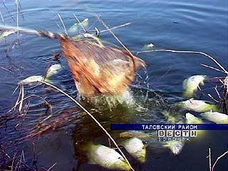 Таловские арендаторы водоемов подсчитывают убытки