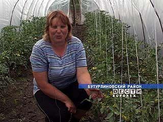 Таловские овощеводы зарабатывают по крупному и сразу на год вперед