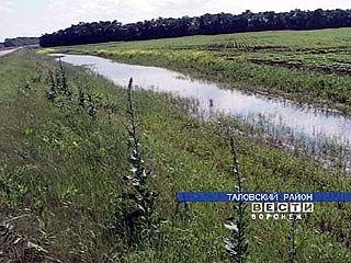 Таловские сельхозугодья превращаются в болота