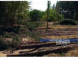Темпы газификации области огорчают лесозаготовителей