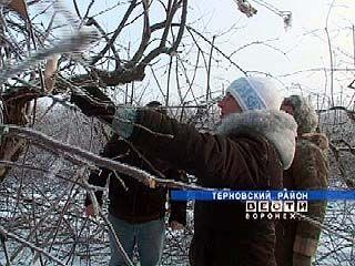 Терновские садоводы: надежда на урожай еще есть
