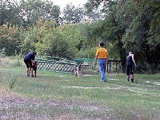 Тренировочную площадку для собак в Воронеже стерли с лица земли