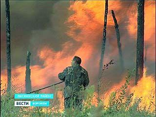 Троицкое днём погрузилось в ночь. Пожарные боролись с лесным пожаром в Лискинском районе